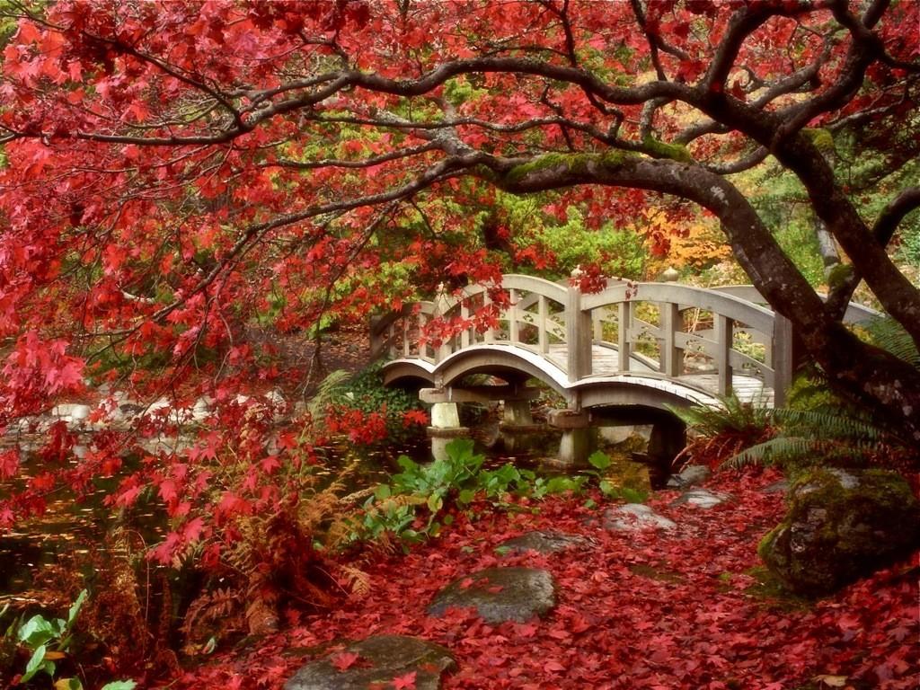 fall04 10 осенних фотографий, которые стали хитами в блогах