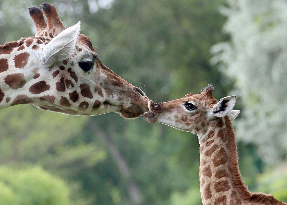 Мама, она и в Африке Мама!