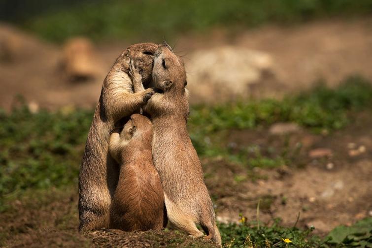 15 очаровательных поцелуев среди животных