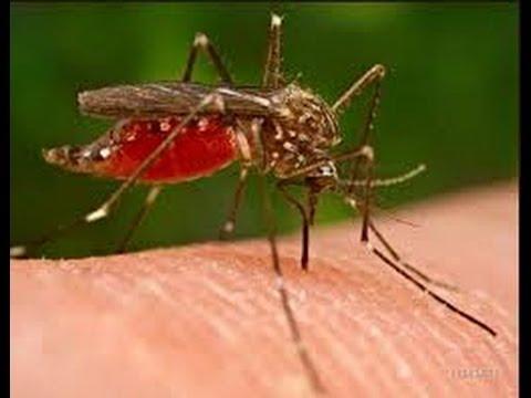 Народные средства при укусах насекомых
