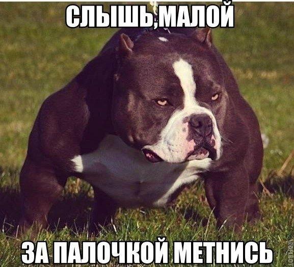 ПРИКОЛЬНЫЕ КАРТИНКИ С НАДПИСЯМИ. ЭДВАЙСЫ-48.