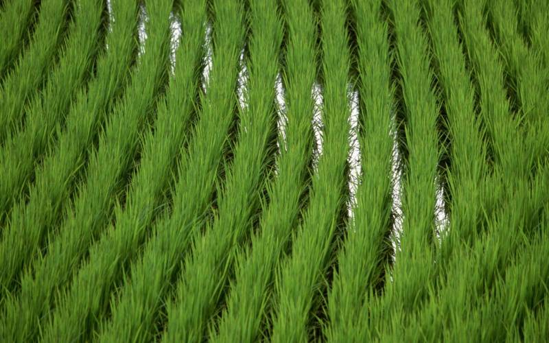 Лидеры не только по пшенице:…
