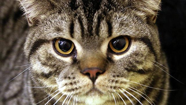Бездомный кот помог мальчику, пропавшему под Калининградом