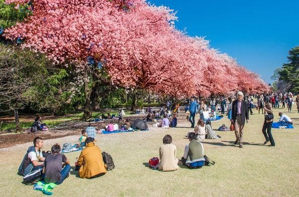Боясь заговаривать с иностранцами, японец бесплатно пускал их в парк