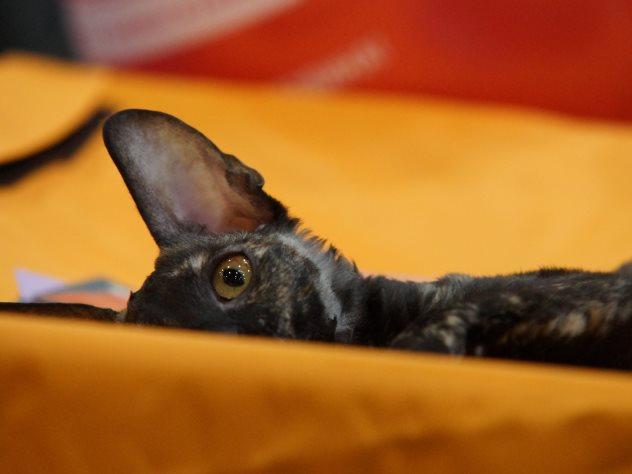 Спасатели освободили «замурованную» в монтажной пене кошку