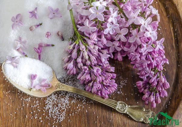 10 видов варенья, которое можно сварить весной
