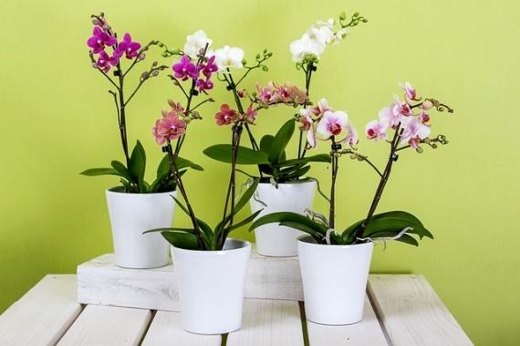 Орхидеи: Блог им. shance