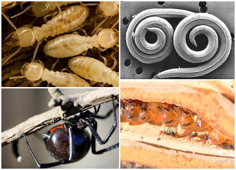 Самые опасные насекомые нашей планеты