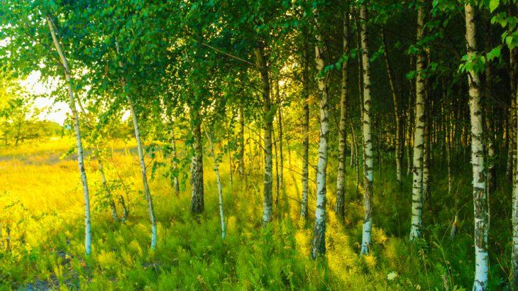 По мере потепления широколиственные леса распространяются к северу, а тайга идет еще дальше, туда, где раньше была тундра. / earth.com