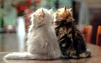 Кошки и Котята 10
