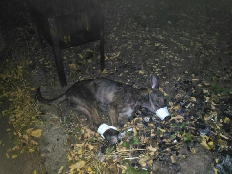 Спасение собаки, из которой хотели приготовить шашлык
