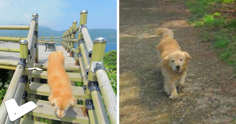 Пёс следовал за фотографом Google карт и попал в каждый кадр