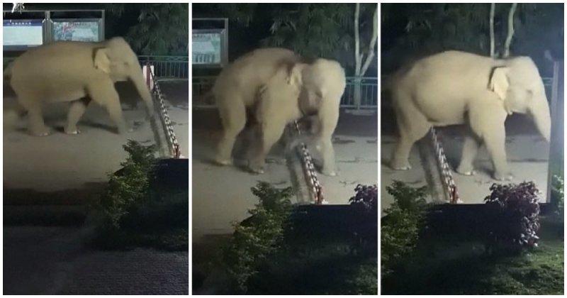 Дикий слон нелегально перешёл китайскую границу