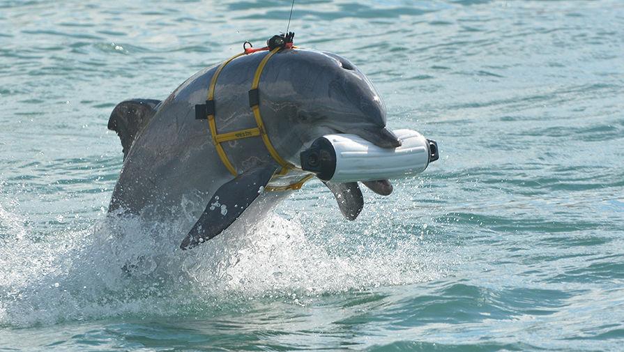 Тайна дельфинов-патриотов