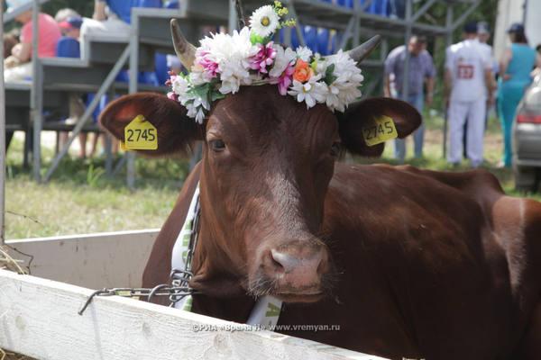 Производство молока увеличено в 26 районах Нижегородской области