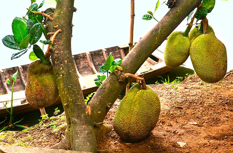 Как растут некоторые экзотические фрукты