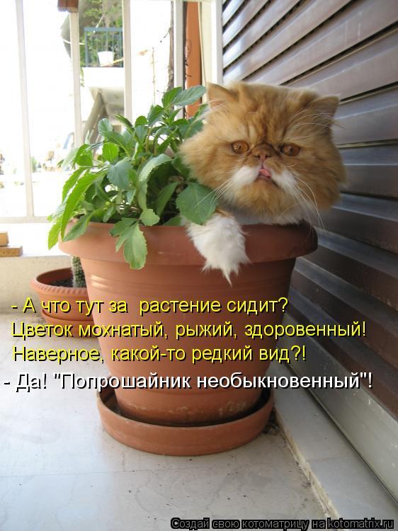 Котоматрица: - А что тут за растение сидит? Цветок мохнатый, рыжий, здоровенный! Наверное, какой-то редкий вид?! - Да!