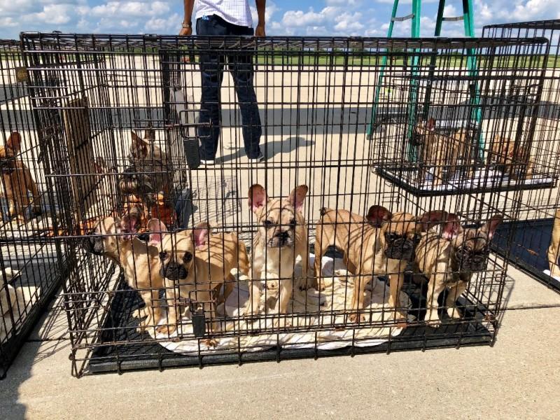В Техасе спасли щенков франц…