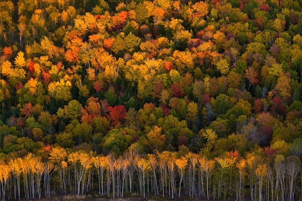 fall02 10 осенних фотографий, которые стали хитами в блогах
