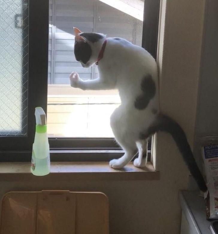 коты с харизмой, смешные коты