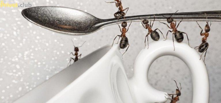 Как избавиться от муравьев в квартире домашними средствами