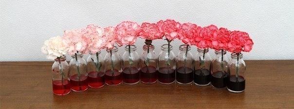 Таким способом можно менять окраску блеклых цветов. Просто добавьте пищевого красителя в воду с цветами.