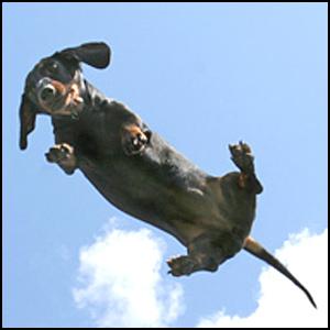 Про одну летящую собаку..