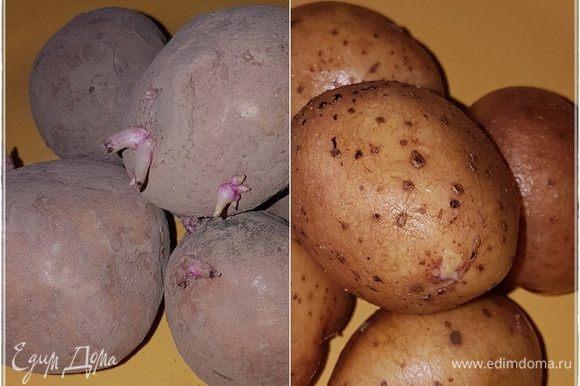 Перво-наперво, картошка. Подвал у нас сухой, поэтому хранится картошка замечательно. А ростки? Ну так и что? Пора уже им пробиваться, тем более что картошка у нас не по-европейски вытравленная, а самая что ни на есть живая. Вот. Достали пяток, значит, картошек из закромов и хорошо помыли.
