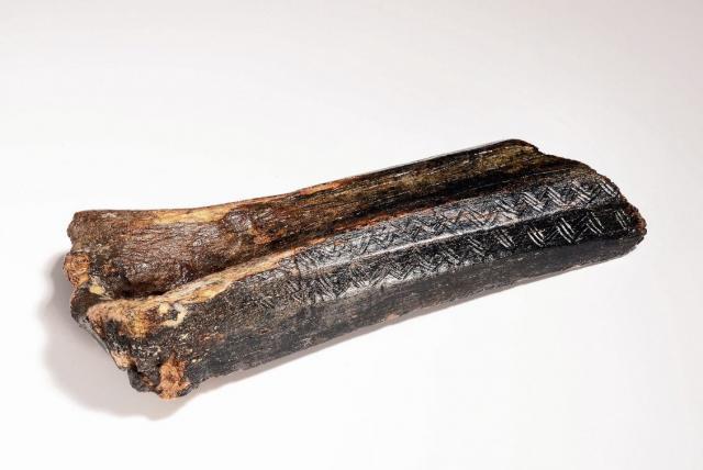В Северном море найдена кость с узорами возрастом 13,5 тыс. лет