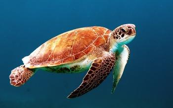 Окаменелости черепахи юрского периода найдены в Китае