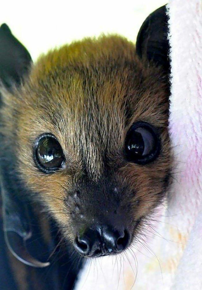 Эта фотоподборка изменит ваше мнение о летучих мышах