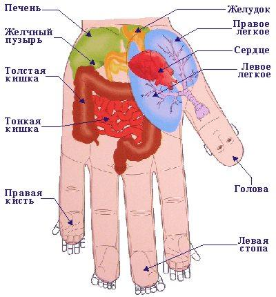Как определить болезни человека по его рукам (Советы медиков)
