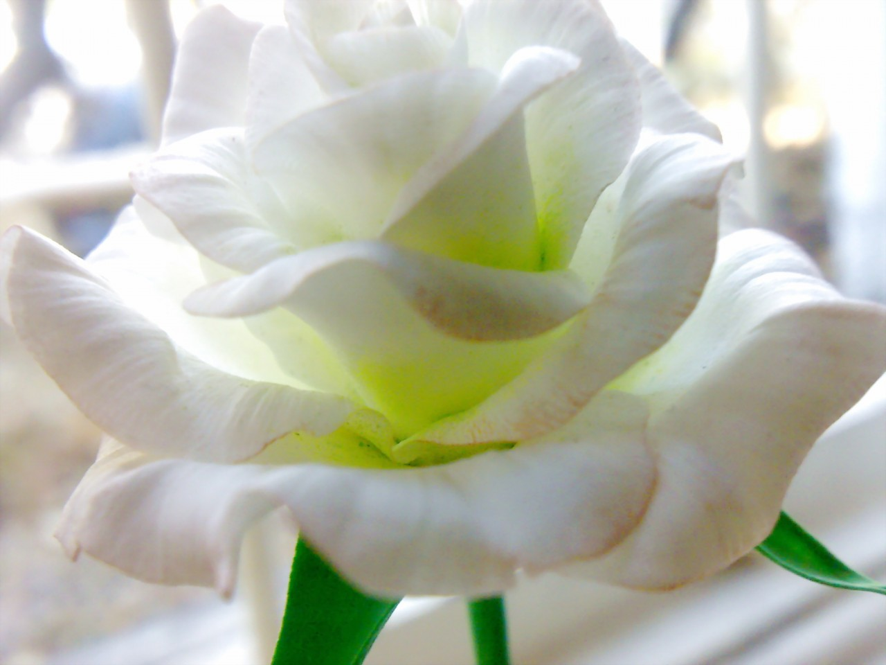 Цветы из полимерной глины МК