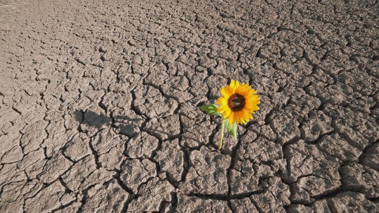 Дачные хлопоты. Как сажать растения на глинистой почве?