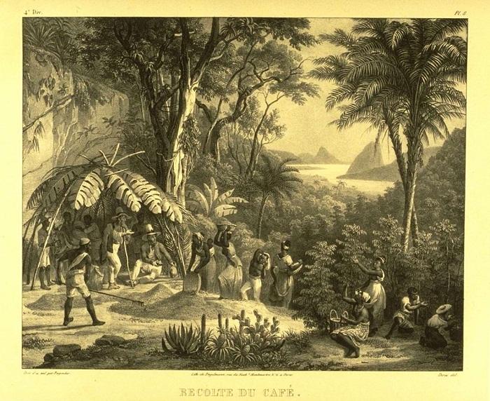 Рабы занимаются сбором урожая кофе (Бразилия, 1830-е годы)