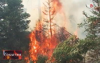 В Забайкалье горит более 30 гектаров леса