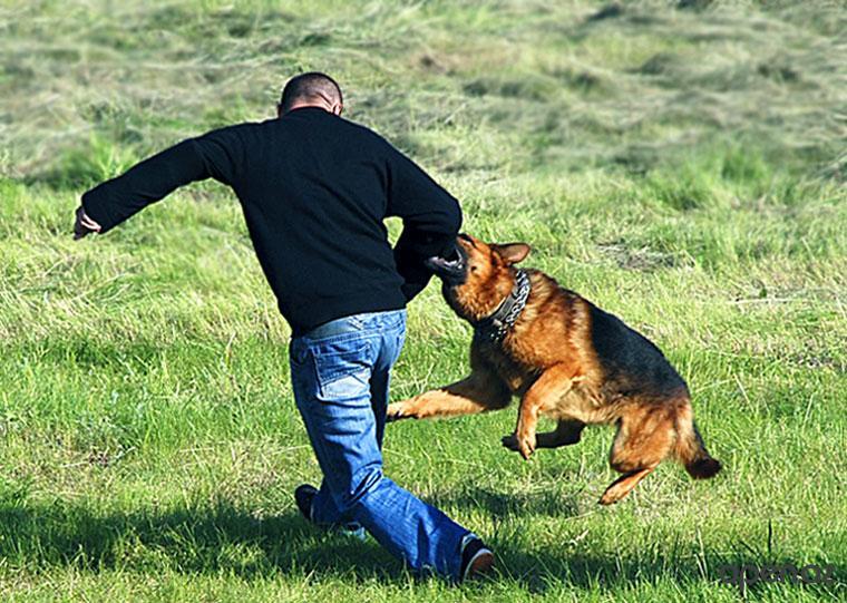 Если на вас напала собака