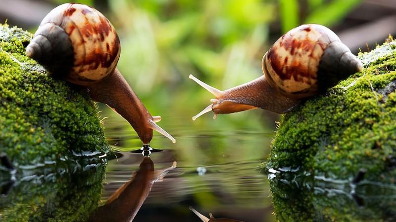 23 интересных факта о животных, которые вас удивят