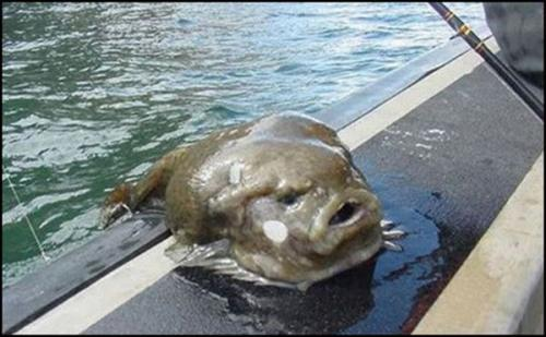 Рыбы как люди...