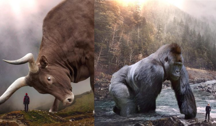 Фотофантазии на тему животного мира