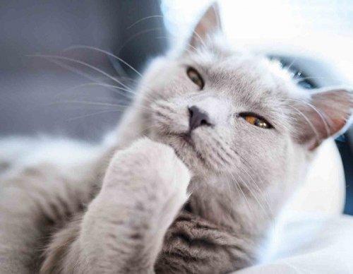 Кошки, задумавшиеся о чём-то очень важном