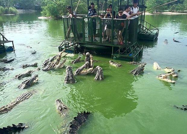 Крокодиловая ферма в провинции Чонбури для любителей острых ощущений