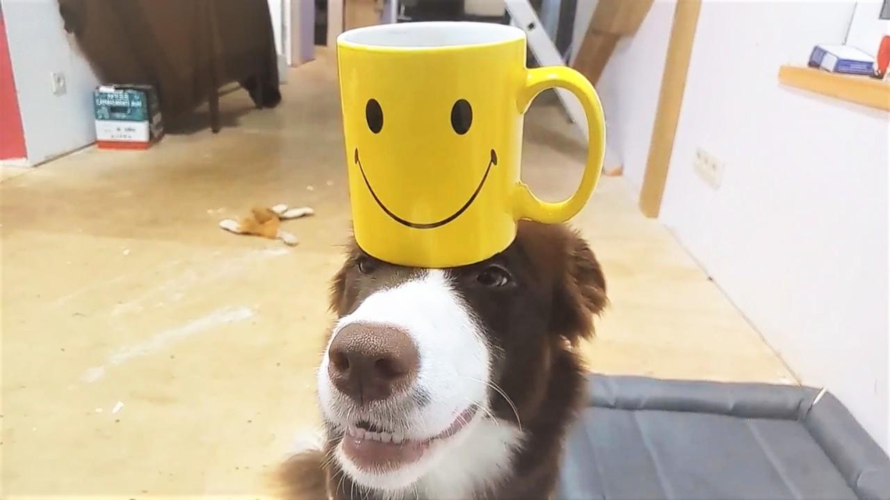 Самые терпеливые собаки и кошки