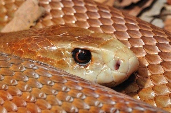 Австралийский юноша выжил после укуса змеи