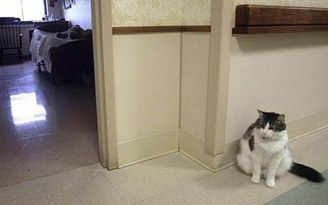 Чующий смерть кот оказался точнее в диагнозах, чем врачи