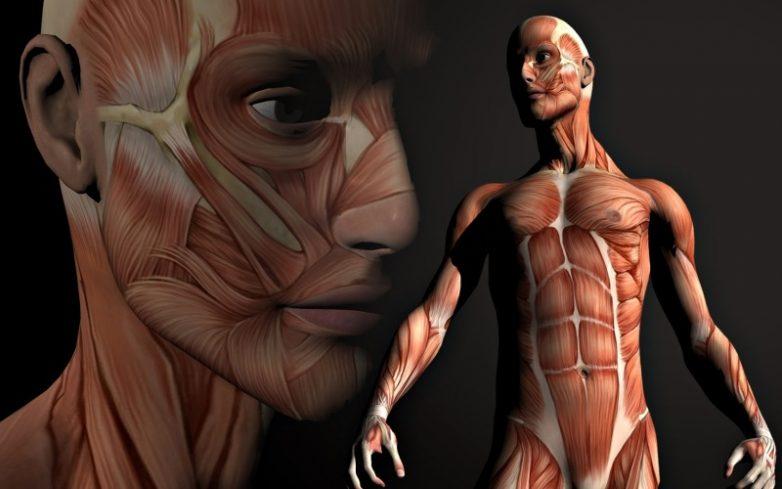 С какой скоростью обновляется наш организм?