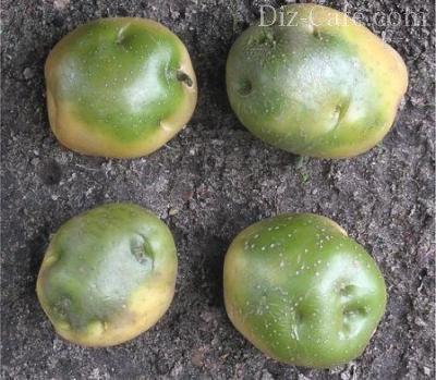 Прячем картофель, томаты и капусту
