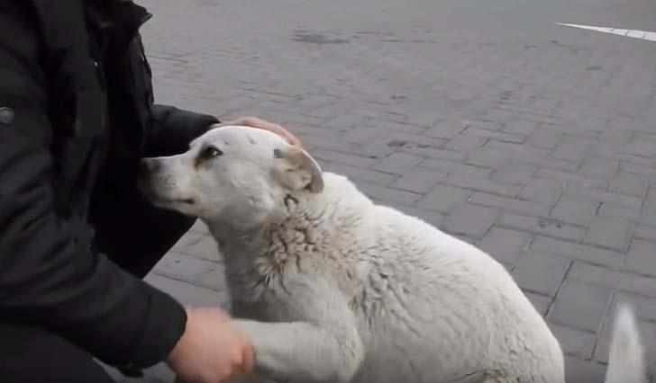 Дружелюбный бродячий пёс