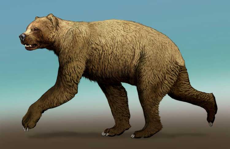 В поисках Иркуйема - легендарного огромного бурого медведя с севера