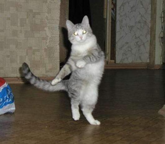 Как сделать чтобы кошка не бесилась